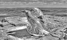 """תערוכת פל""""א - פנינה לקידום אמנים לזכרה של פנינה יוכטמן ז''ל"""
